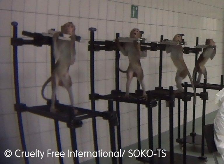 Pharma-Testlabor foltert Tiere
