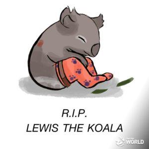 Lewis, der Koalabär