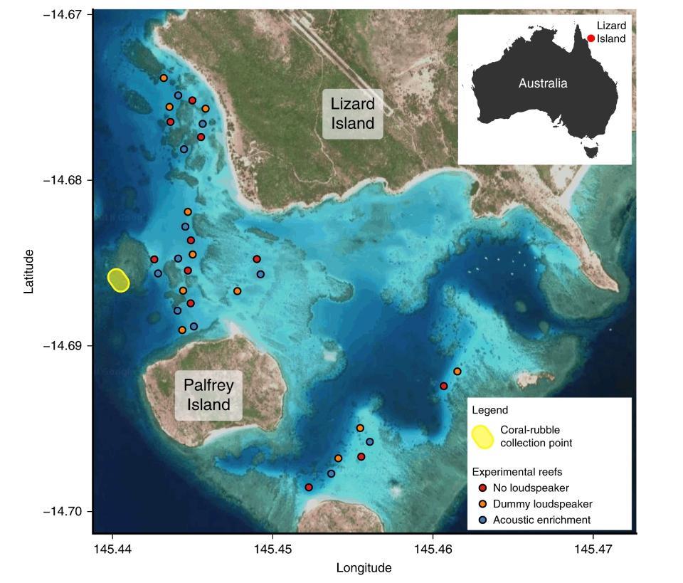 Geräusche beleben abgestorbene Korallenriffe